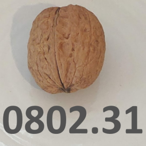 A walnut and its HS, Harmonized System code, 080231, used to represent our article on customs classification and the Harmonized system.